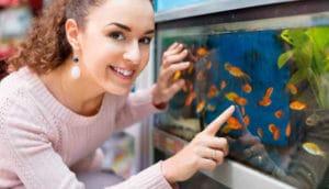 A visão empresarial feminina do mercado de aquarismo