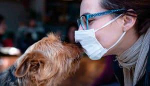 O impacto da pandemia na economia veterinária