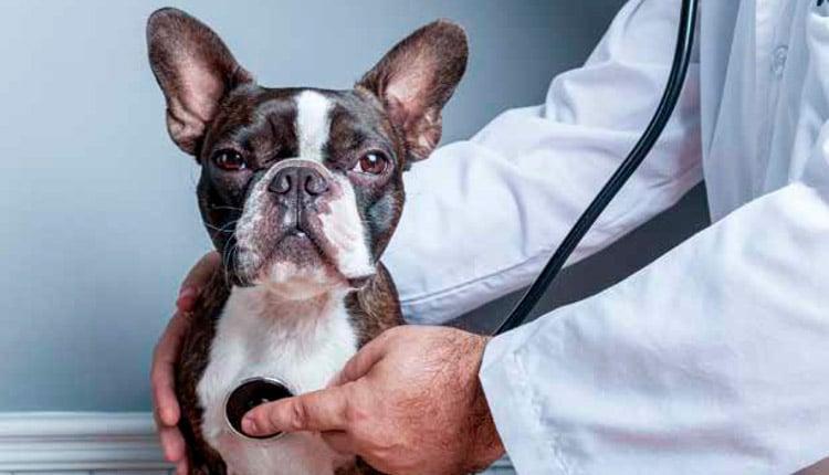 Inflamação e câncer em pequenos animais