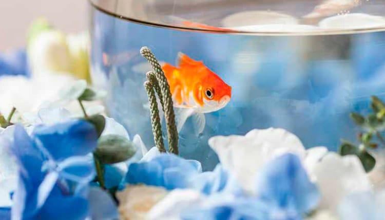 Quanto tempo vivem os peixes de aquário?