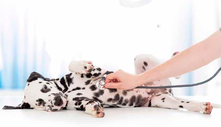 A saúde dos pets