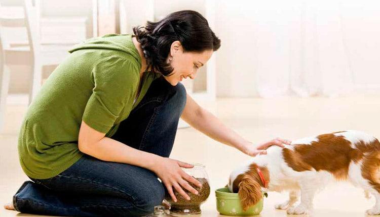 Alimentos funcionais se consolidam no mercado de rações para pets