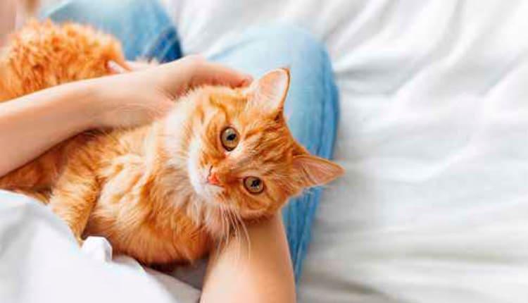 As mudanças de rotina e os cuidados com os felinos