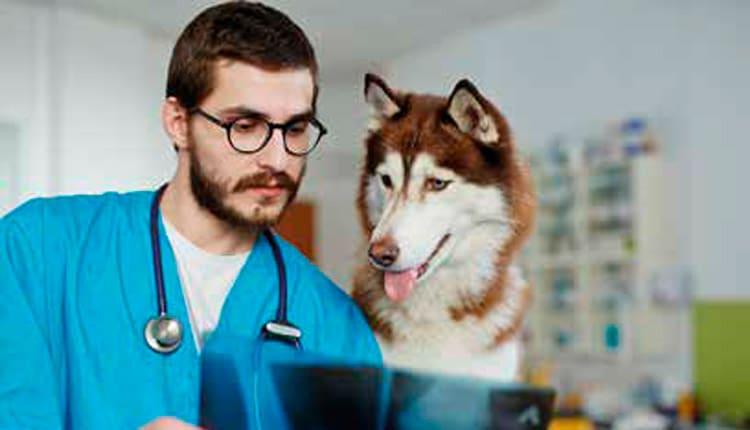 O mercado de trabalho na Radiologia Veterinária