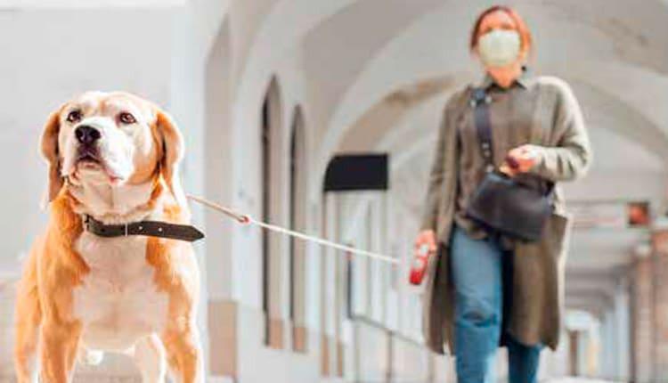 O novo normal e os cuidados com a higienização dos pets