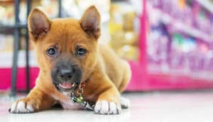 Mercado pet deve crescer 13% em 2020 puxado por pet food e produtos veterinários