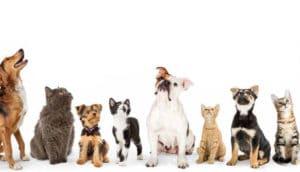 Pesquisa Radar Pet: Brasil tem a segunda maior população pet do mundo