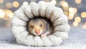 Pets exóticos precisam de cuidado redobrado nas temperaturas frias