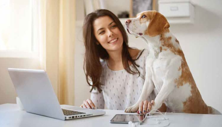Vendas on-line no setor pet crescem mais de 300% entre 2017 e 2020 no Brasil
