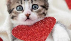 Os felinos ganham o coração dos brasileiros nos últimos anos