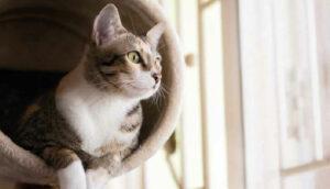 Gato estressado?