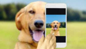 Pet influencers Brasil é o 2º país que mais busca perfis de animais