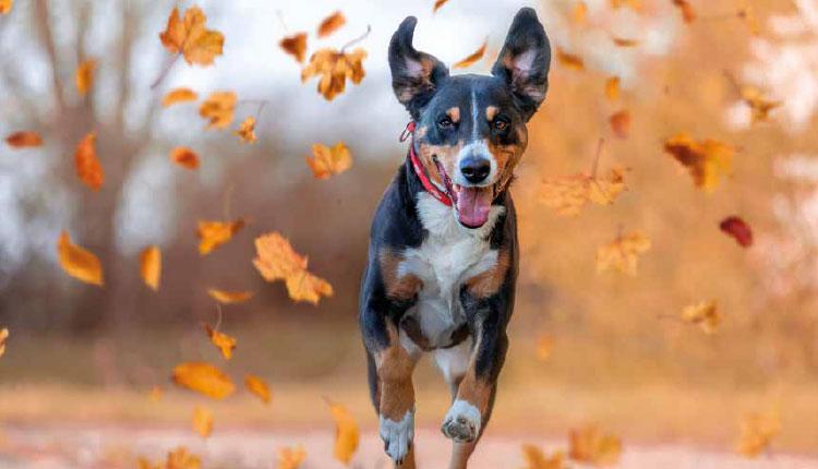 Os cuidados corretos com os pets no Outono