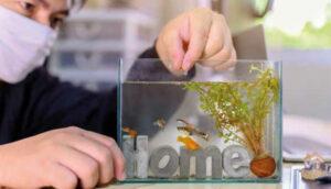 O mercado de aquarismo nos tempos de pandemia