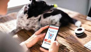 Quais são as marcas de alimentos pet que melhor performam no digital?