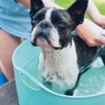 Dar banho no cão em casa requer atenção e alguns cuidados