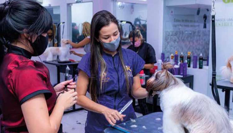 Em alta, setor pet vira opção de empreendedorismo e emprego