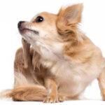 Doenças de pele em pets