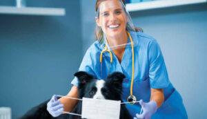 Covid-19 - O mundo veterinário antes, durante e depois