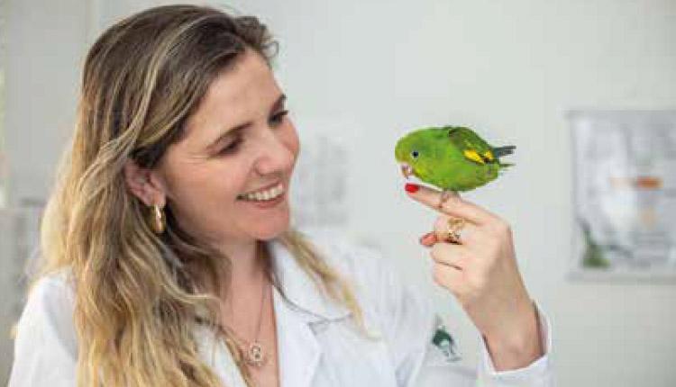 O que é preciso saber antes de ter um pássaro de estimação