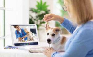 Comac apresenta resultados de pesquisa sobre o setor pet brasileiro em 2020