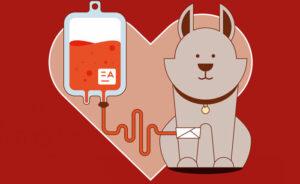 Doadores de Sangue
