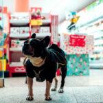 Crescimento e oportunidades do mercado pet no Brasil